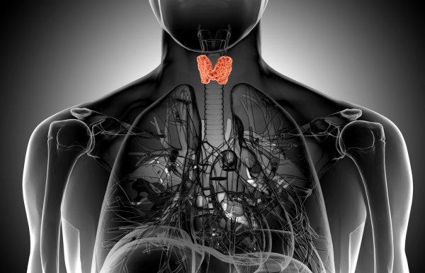 МРТ Щитовидной железы сделать в Киеве